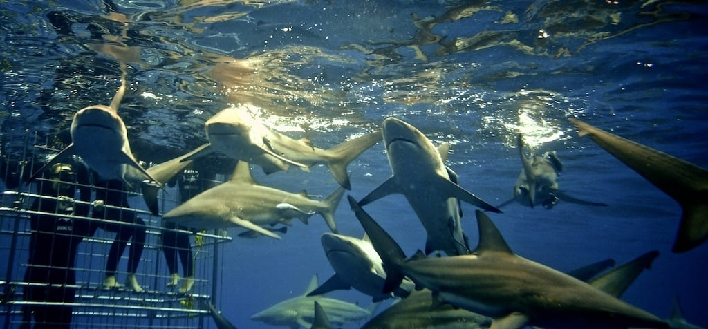 Shark Cage Diving Experience in Durban-1
