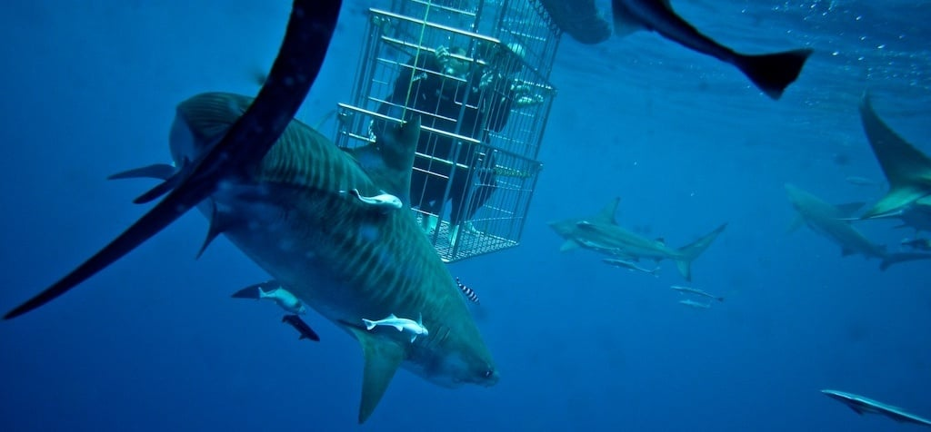 Shark Cage Diving Experience in Durban-2
