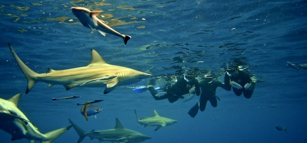 Snorkelling With Sharks Experience in Durban-1