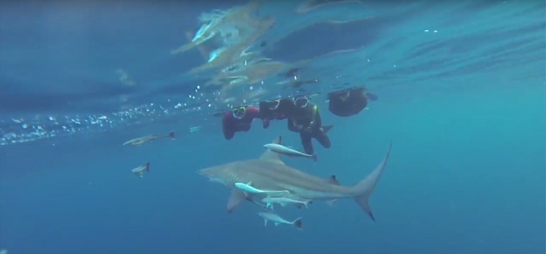 Snorkelling With Sharks Experience in Durban-3
