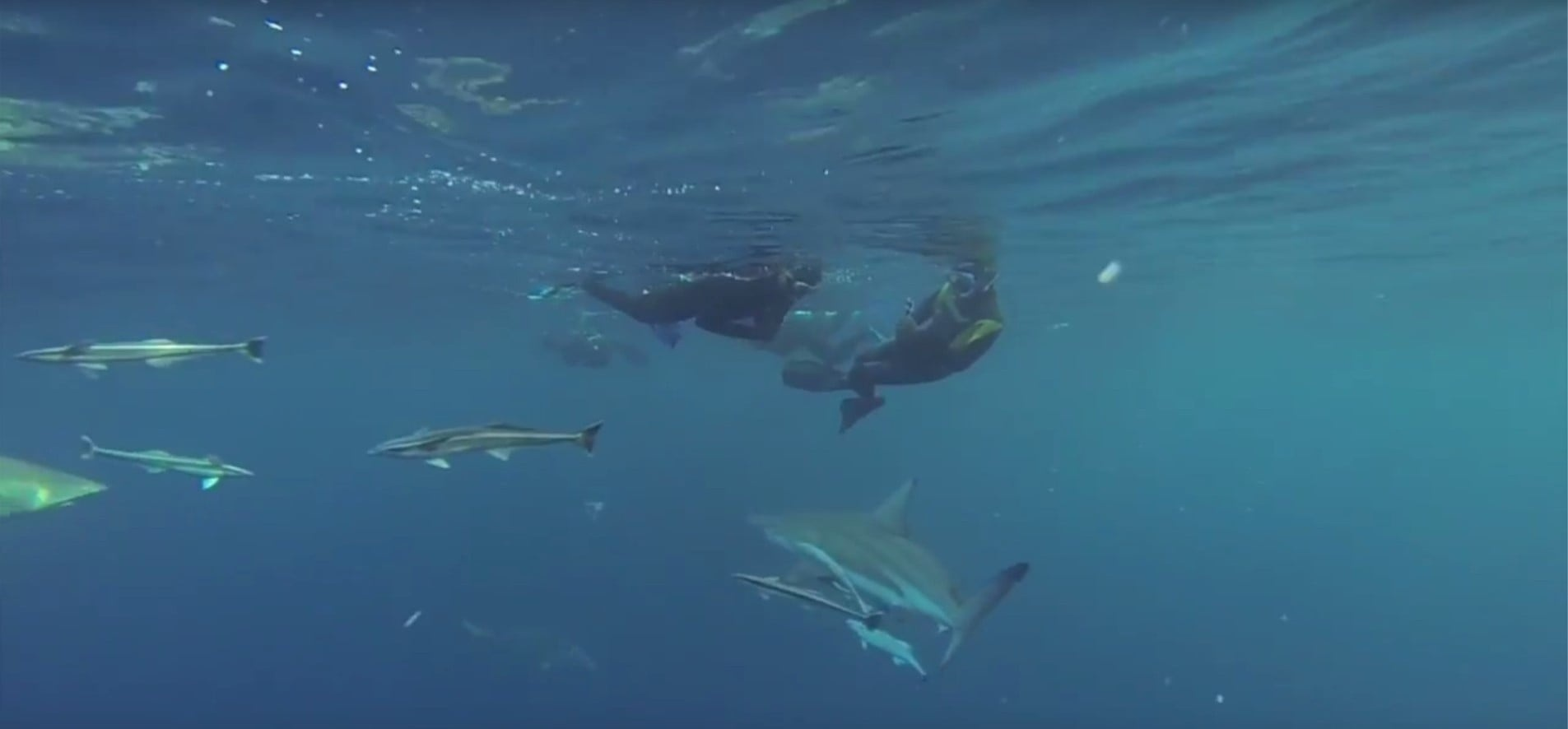 Snorkelling With Sharks Experience in Durban-2