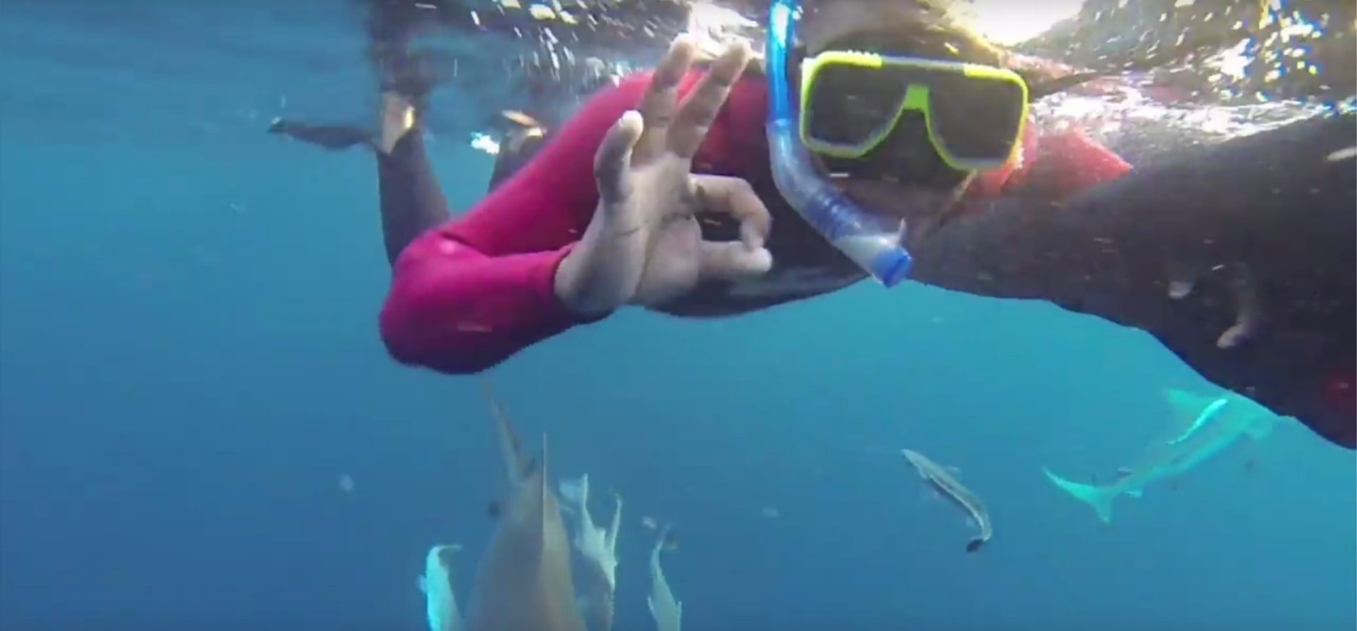 Snorkelling With Sharks Experience in Durban-5