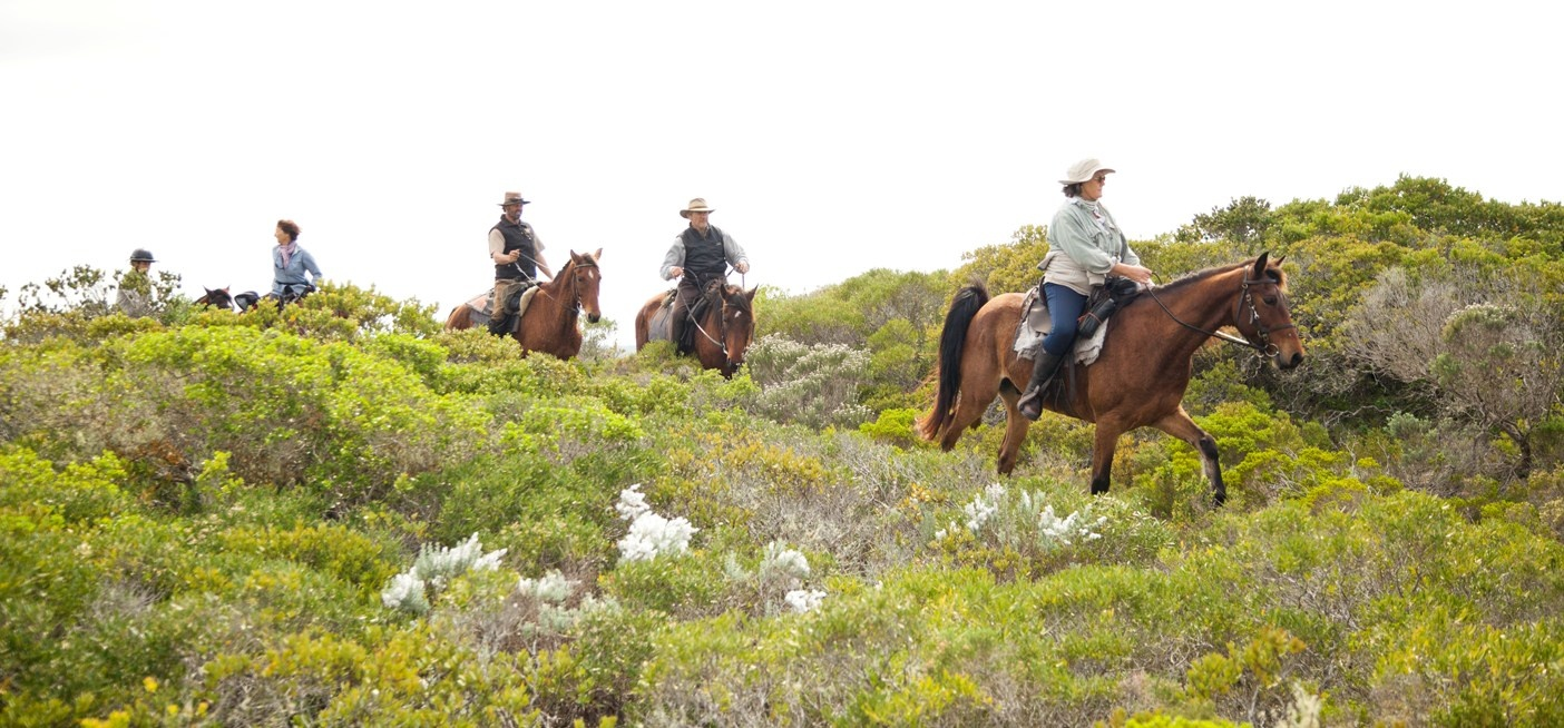 2 Hour Horseback Mountain Trail in Stanford-2