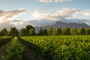 /images/Stellenbosch-Wine-Tasting-Day-Tour-Experience-1920x1080-resize.jpg
