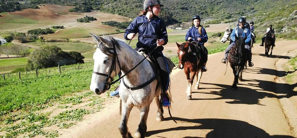 Half Day Horse Riding and Wine Tasting in Paarl-7