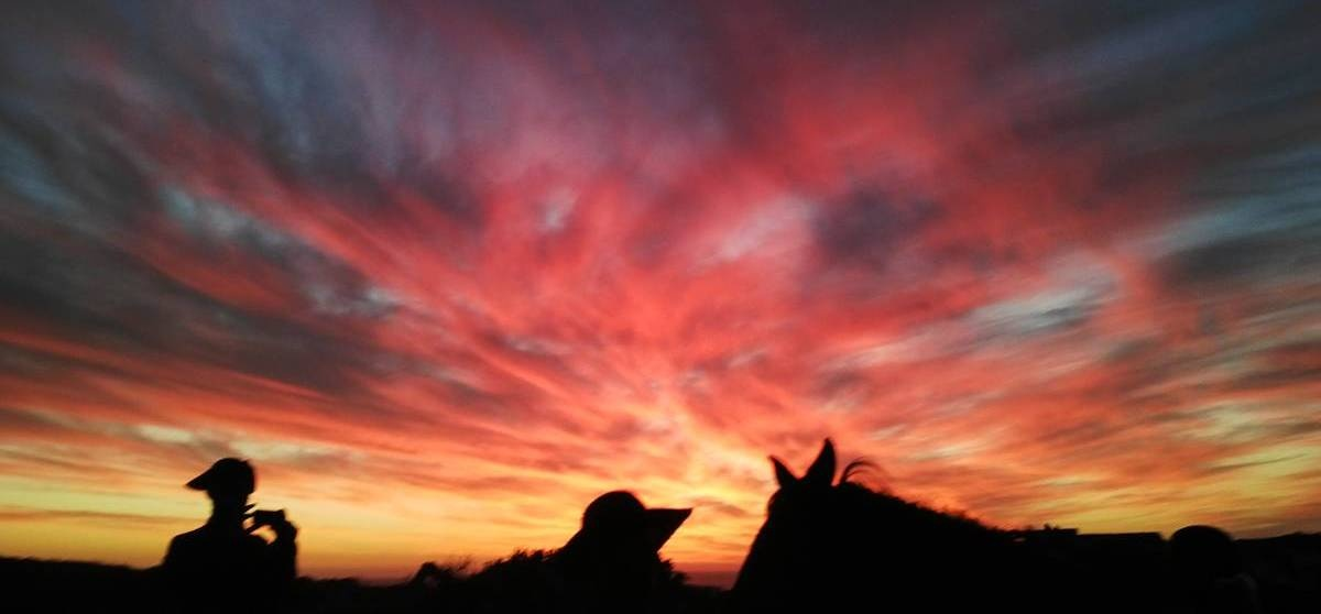 Two Hour Sundowner Evening Horse Ride in Paarl-1