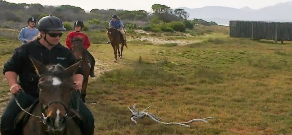 Beach Horse Riding Experience With Breakfast in Kleinmond-6