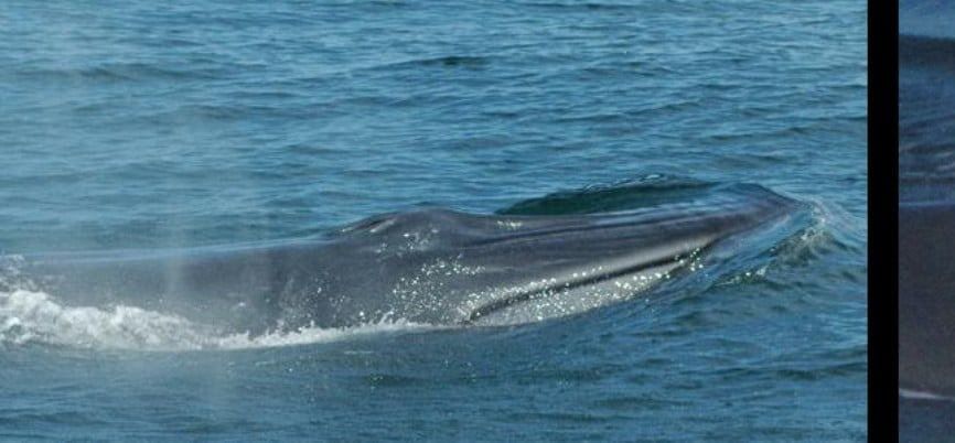 Plettenberg Bay Whale Watching Trip - Child-4