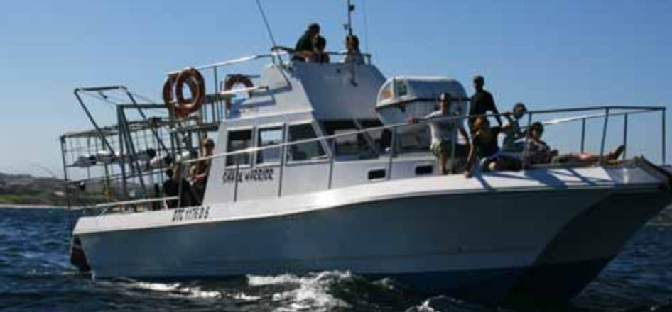 White Shark Cage Diving Experience - Mossel Bay-4
