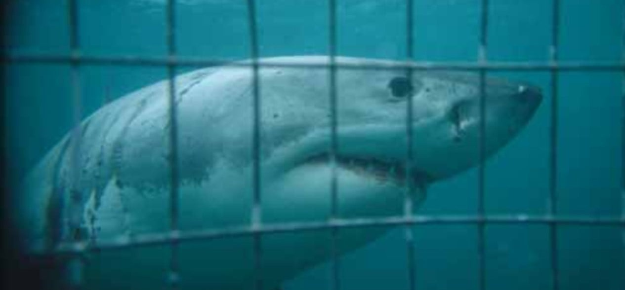 White Shark Cage Diving Experience - Mossel Bay-5