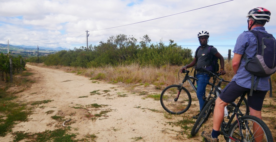 Bikes 'n Wines Stellenbosch Winery Tour Review