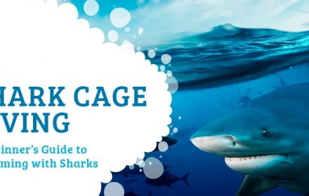 shark-cage-diving-article.jpg