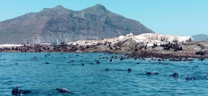 Snorkel With Seals in Cape Town-1